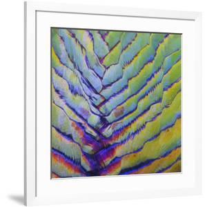 Fan Palm Abstract by Karen Ussery