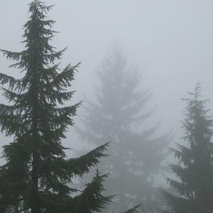 Foggy Morning 1 by Karen Ussery