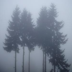 Foggy Morning 3 by Karen Ussery