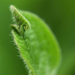 Leaf Curl by Karen Ussery