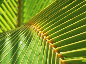 Palm Frond by Karen Ussery