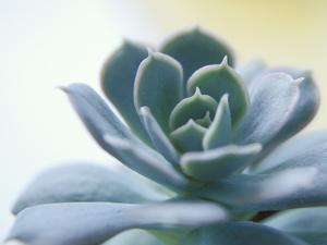 Succulent Spike by Karen Ussery