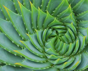 Succulent Swirl by Karen Ussery