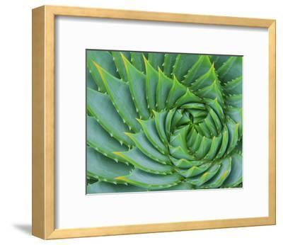 Succulent Swirl