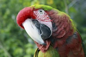 Quizacle Parrot by Karen Williams