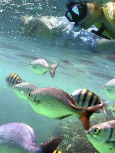 Snorkeling by Karen Williams