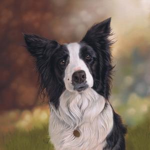 Collie Perdy by Karie-Ann Cooper