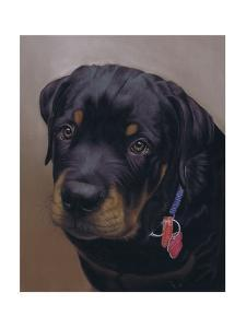 Rottweiler Solo by Karie-Ann Cooper