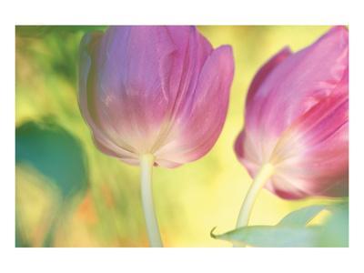 Tulip Twirl
