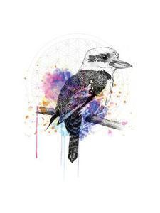 Kookaburra by Karin Roberts