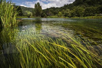 River Grass Sways Underwater In The Crystal Clear Una River In Bosnia Herzegovina by Karine Aigner