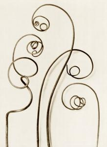 Bryonia Alba, White Bryony by Karl Blossfeldt