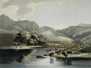 Herds of Bison and Elk on the Upper Missouri by Karl Bodmer