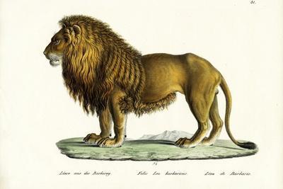 Barbary Lion, 1824
