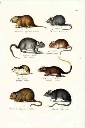 Different Kinds of Mice, 1824