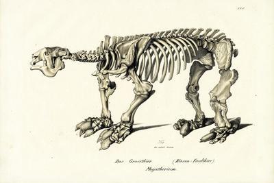 Giant Ground Sloth, 1824