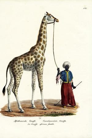 Giraffe, 1824