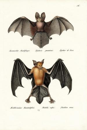 Hollow-Faced Bat, 1824