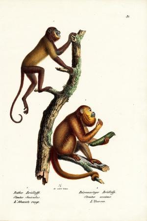 Red Howler Monkeys, 1824