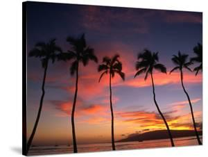 Coconut Palms and the Island of Lanai at Sunset from the Seawall on Front Street, Lahaina, Maui by Karl Lehmann