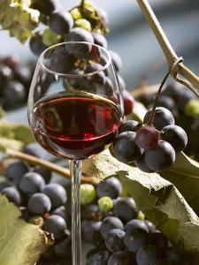 A Glass of Red Wine with Grapes in the Background by Karl Newedel