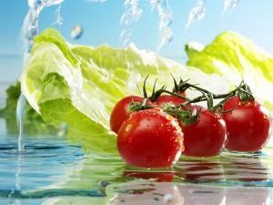 Tomatoes and Romaine Lettuce with Water by Karl Newedel