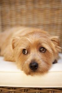 A Dog's Life VI by Karyn Millet