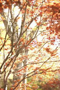 Autumn Leaves by Karyn Millet