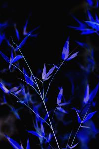 Bamboo at Night I by Karyn Millet