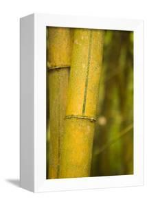 Bamboo I by Karyn Millet