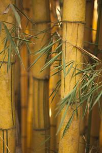 Bamboo II by Karyn Millet