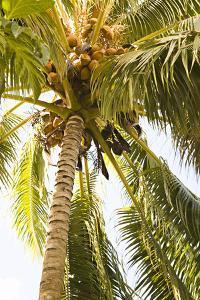 Beach Palm I by Karyn Millet