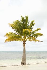 Beach Palm II by Karyn Millet