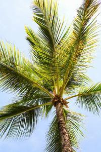 Below the Palms I by Karyn Millet