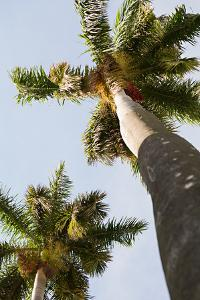 Below the Palms II by Karyn Millet
