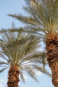 Below the Palms III by Karyn Millet