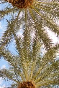 Below the Palms IV by Karyn Millet