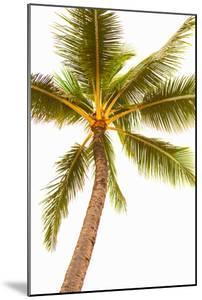 Below the Palms V by Karyn Millet