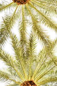 Below the Palms VI by Karyn Millet