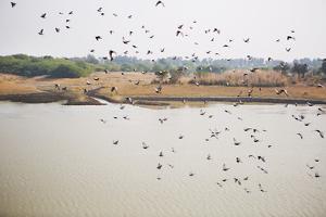 Birds I by Karyn Millet