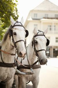 Bridled Horses by Karyn Millet