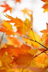 Colors of Fall I by Karyn Millet