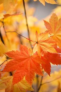 Colors of Fall II by Karyn Millet