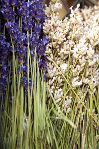 Cut Lavender II by Karyn Millet