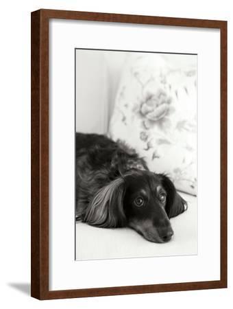 Dachshund Black and White by Karyn Millet