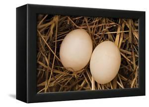 Eggs I by Karyn Millet
