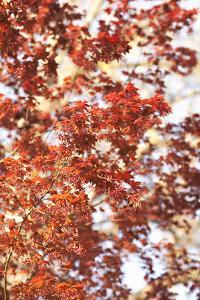 Fall Leaves by Karyn Millet