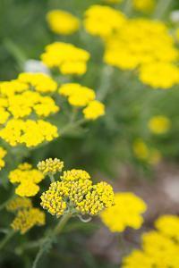 Field of Yellow by Karyn Millet