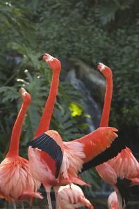 Flamingos I by Karyn Millet