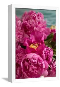 Fuchsia Peonies II by Karyn Millet